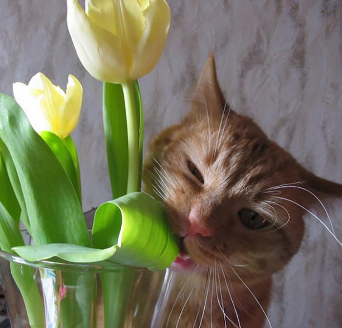 День, смешные картинка с тюльпанами