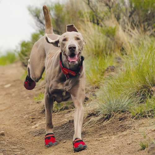 Red-Dog-Running-Shoes.jpg