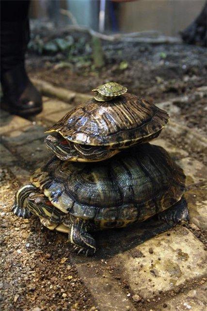 лампа для черепахи красноухой купить